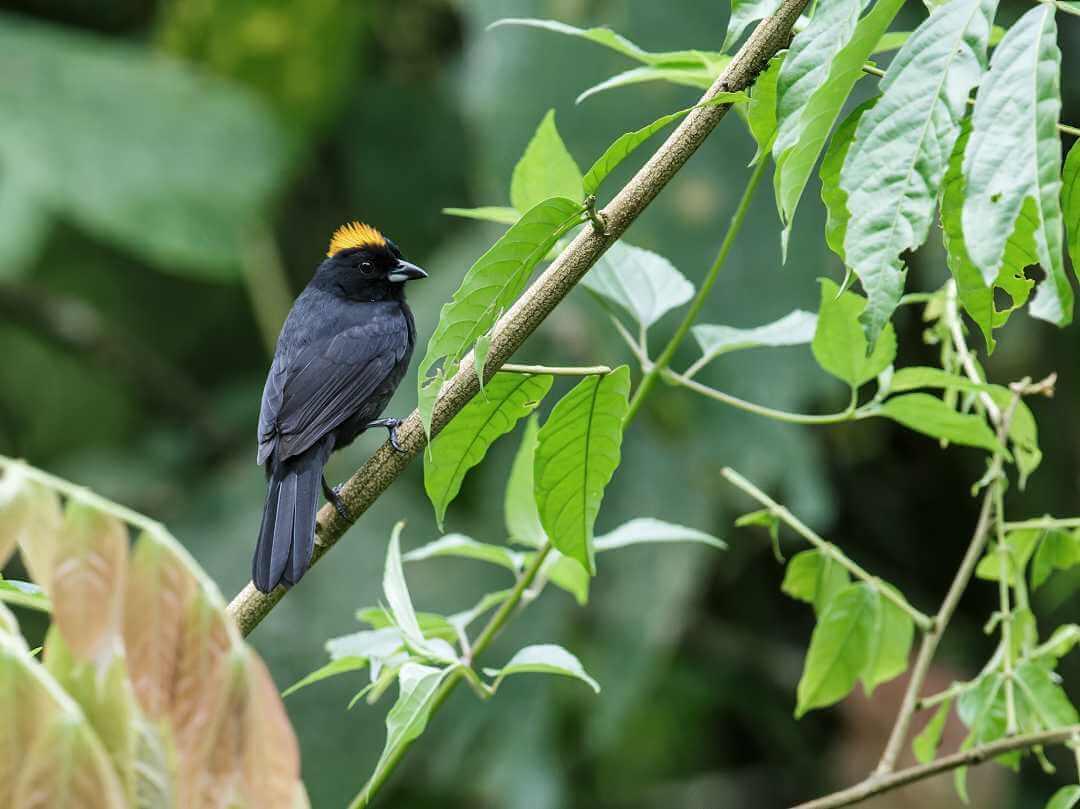 Avistamiento de aves en Cascada La Sirena