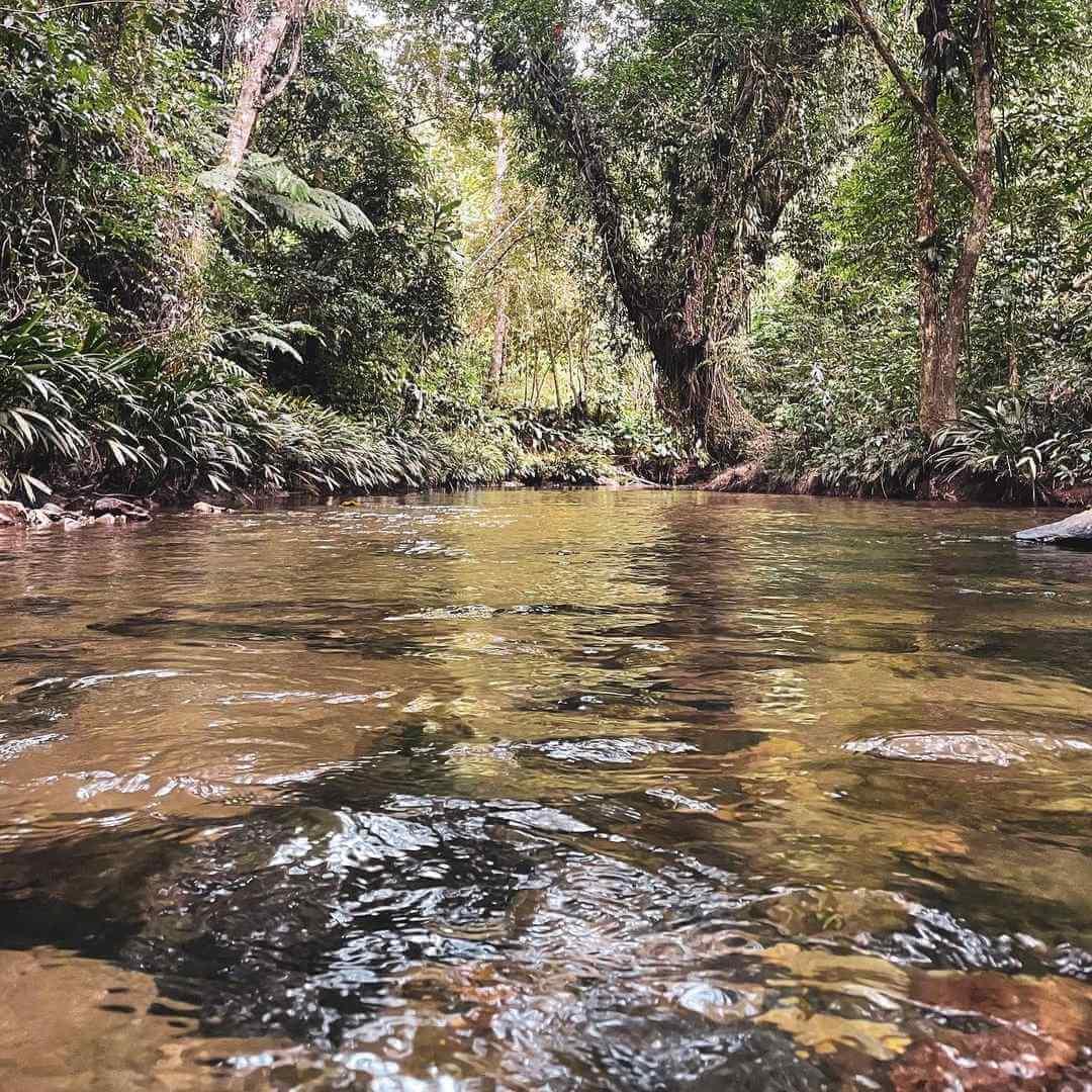 Quebrada las pavas Norcasia