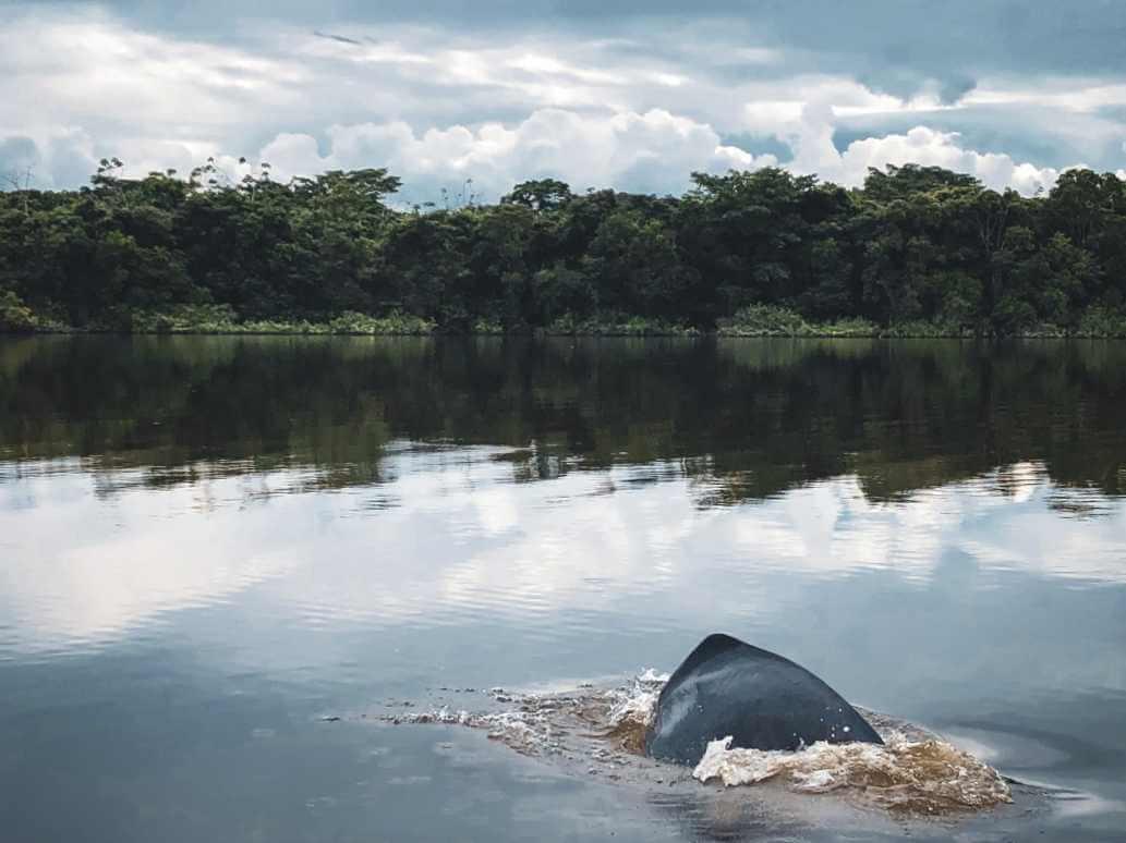Delfines Laguna Damas del Nare