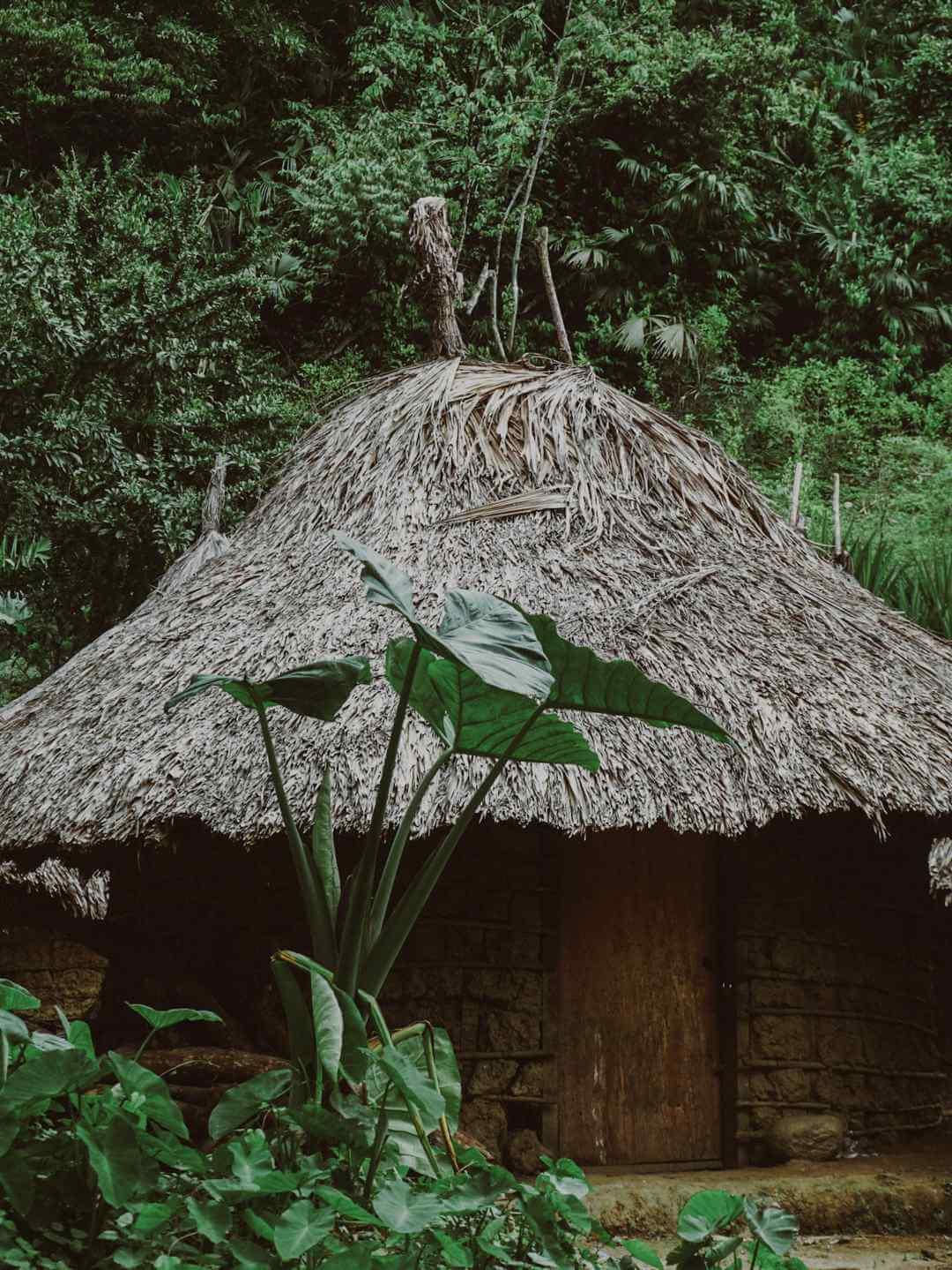 Casas indígenas Kogui