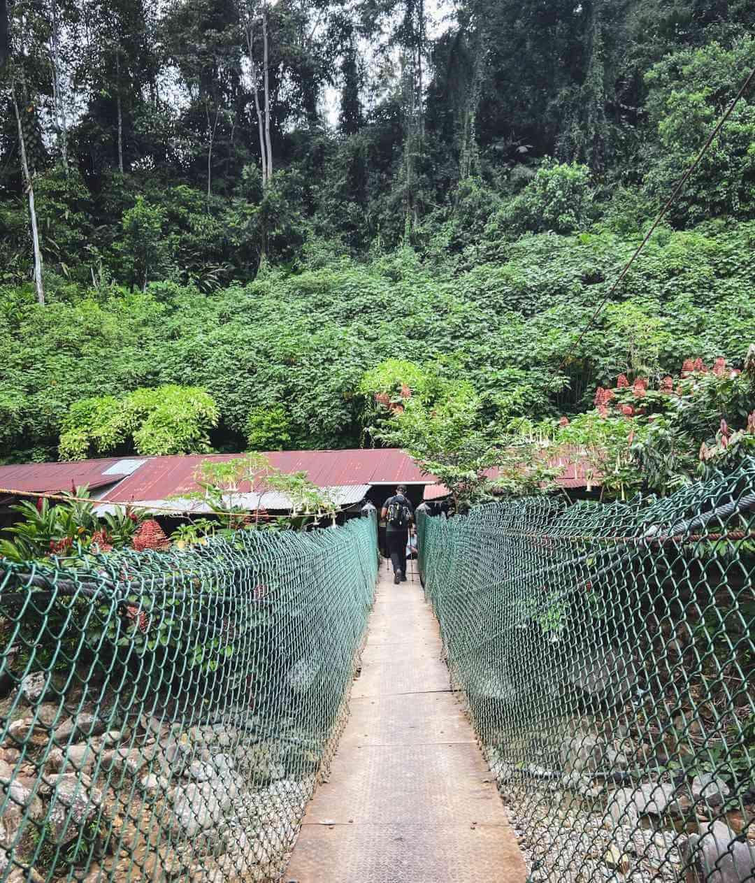 Puentes colgantes de Ciudad Perdida Colombia