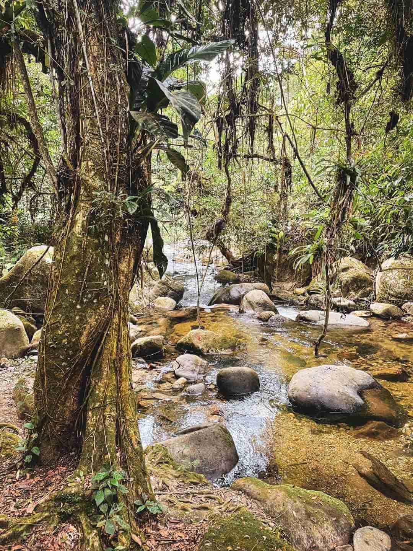 Quebrada del río Buritaca